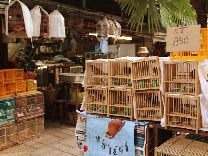 Yuen Po Street Bird Garden, pasar murah di Hong Kong